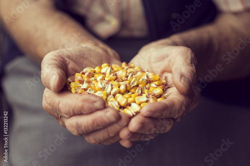 Organic corn production