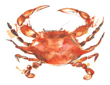Crab Watercolor Painting Illus...