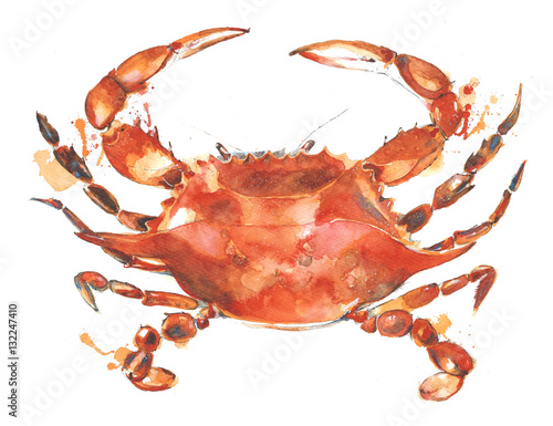 Photo  Crab watercolor painting illustration isolated on white background