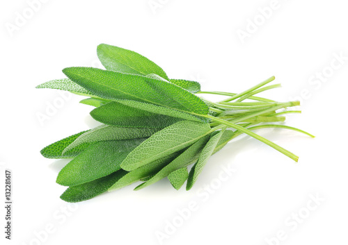 Fototapeta Sage leaves isolated on white obraz