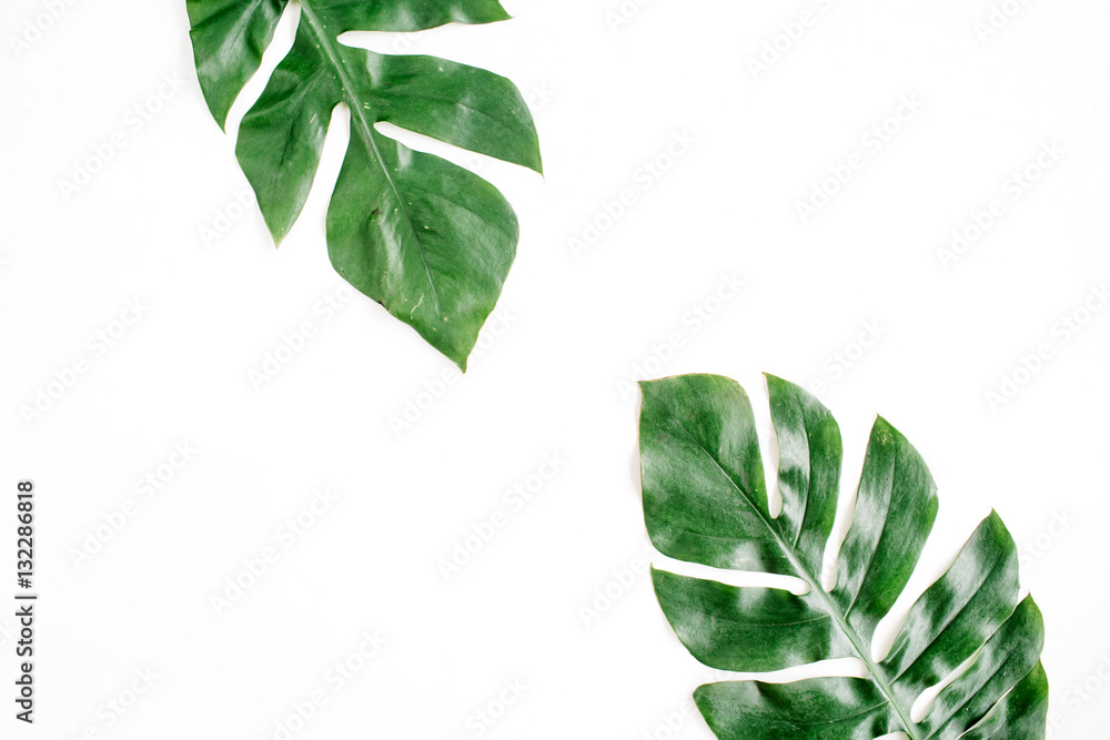 Fototapety, obrazy: Tropical palm leaves. Flat lay, top view