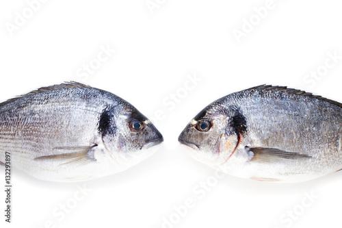 Fotografie, Obraz  Two dorado fish face to face