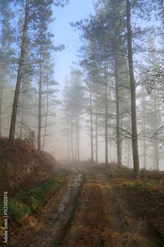 Tuinposter Weg in bos bosque niebla camino país vasco U84A1125-f17