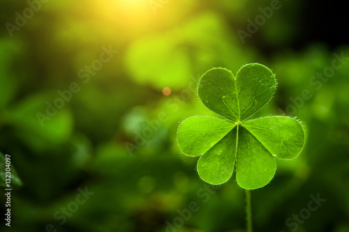 Stampa su Tela  clover leaf in lens flare for Valentine background