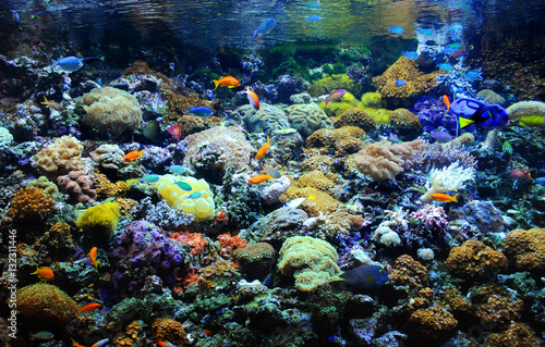 Many small fish in the colorful coral reef