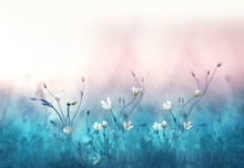 Small White Flowers On A Toned On Gentle Soft Blue And Pink Background Outdoors Close-up Macro . Spring Summer Floral Background. Light Air Delicate Artistic Image.