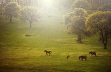 Wilderness Landscape. Wild Horses Grazing On Green Meadow On Summer Evening