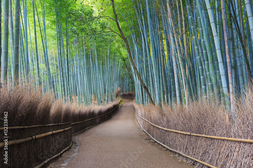 Arashiyama Bamboo Grove of Bamboo Forest in Kyoto, Japan