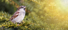 Urban Bird - Cute Sparrow Sitt...