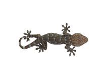 Cute Leopard Gecko Lizard With...