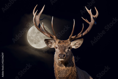Recess Fitting Deer male red Deer portrait looking at you on full moon black background