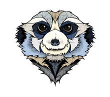Meerkat Head, Illustration