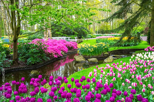 Printed kitchen splashbacks Garden Beautiful spring flowers near pond in Keukenhof park in Netherlands (Holland)