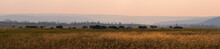 American Bison Grazing In A Field Panorama