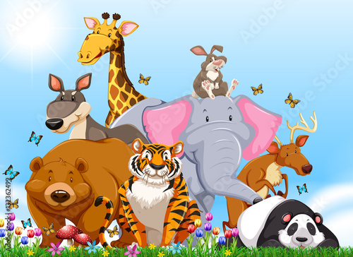 Many types of wild animals in the field