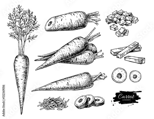 Photographie Carrot hand drawn vector illustration set