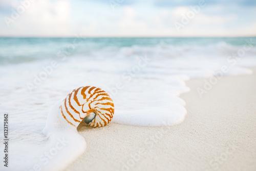 Obraz na płótnie nautilus sea shell on golden sand beach in  soft sunset light