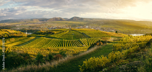 Tuinposter Wijngaard Sunset over vineyards