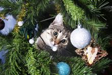 Cat On Christmas Tree. Naughty Kitten. New Year