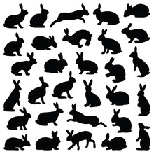 Rabbit And Hare Collection - V...