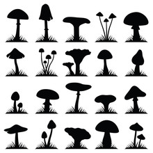 Mushroom And Toadstool Collect...