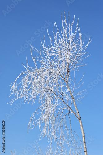 Drzewa liściaste w zimie