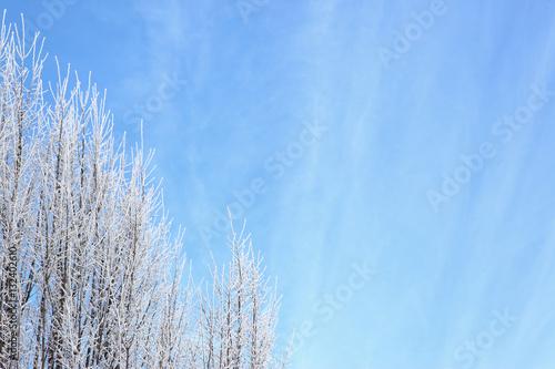 Drzewa liściaste w zimie - fototapety na wymiar