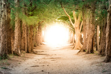 Copyspace Photo Show Pathway To Business Success And Total Freed