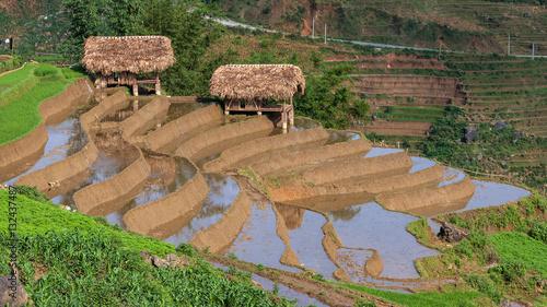 Fotografie, Obraz  Landscapes Sapa of Viet Nam