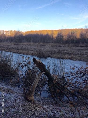 Photo  Von Bieber gefällter Baum am Fluss