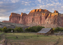 Fruits Campground, Capital Reef National Park