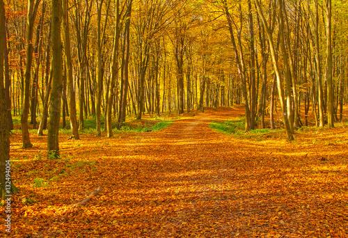 Cadres-photo bureau Miel Nice autumnal scene