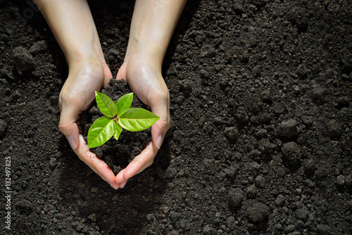 Poster de jardin Vegetal Hands holding and caring a green young plant