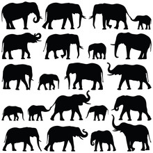 Elephant Collection - Vector Silhouette