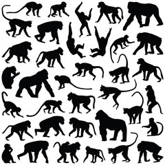 Fototapeta Ape and Monkey collection - vector silhouette