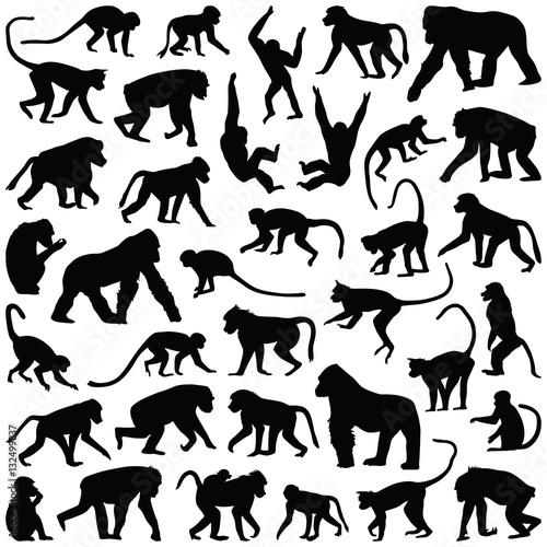 Fotografia Ape and Monkey collection - vector silhouette