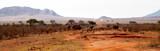 Fototapeta Sawanna - Elephants and zebras in the savannah in Kenya