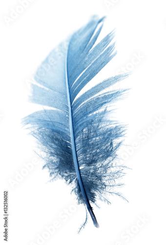 niebieskie pióro na białym tle