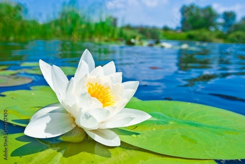 In de dag Waterlelies Water lily floating on lake