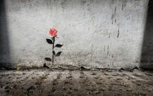 Single Rose Stencil Graffitti On Wall In London