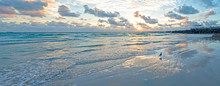 Seagull On Miami South Beach Panoramic View Morning Amazing Light Reflection On Water Gentle Colorful Waves