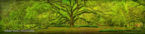 Cuadros en Lienzo Live Oak Tree