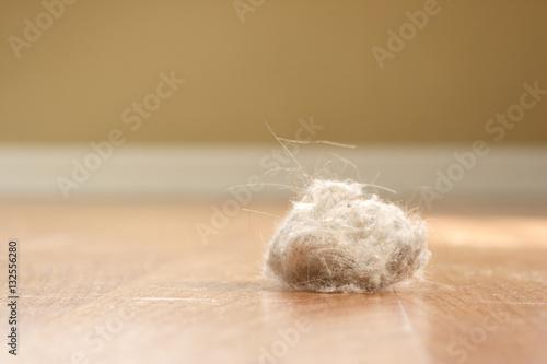 Fényképezés Dust Bunny