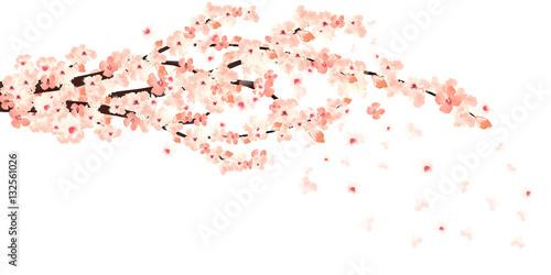 Photo  sakura in bloom