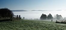 Foggy Autumn Morning