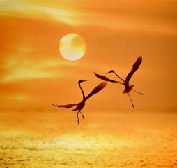 Obraz na Plexi Do łazienki egrets play in sunset