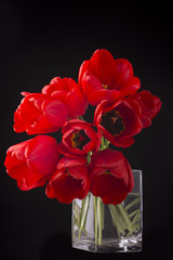 Plakat frech beautiful red tulips
