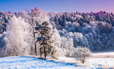 Fototapeta zima na Warmii