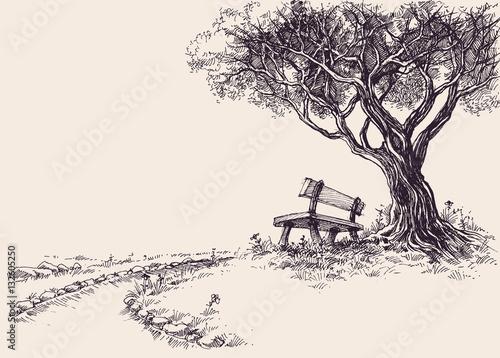 Park sketch. A wooden bench under the tree Fototapeta