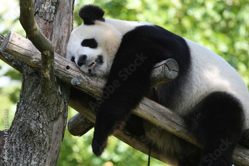 Autocollant pour porte Panda Panda Géant